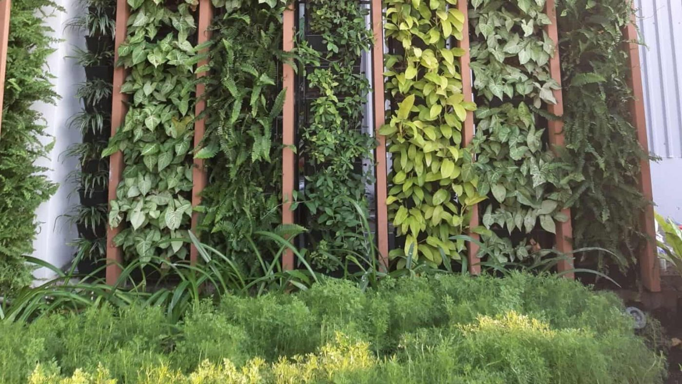 thiết kế vườn đứng